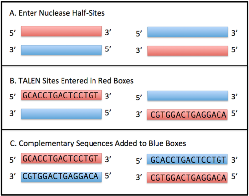 PROGNOS: A Web-based Tool for Designing Engineered Nucleases