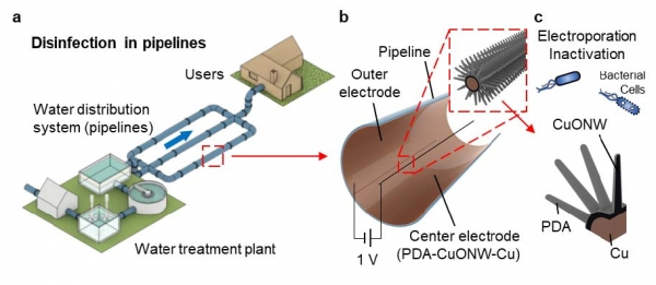 Low-Voltage Nanowire-Assisted Electroporation for Water Disinfection